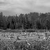Dead forest in B&W 1.