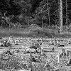 Dead forest in B&W 3.