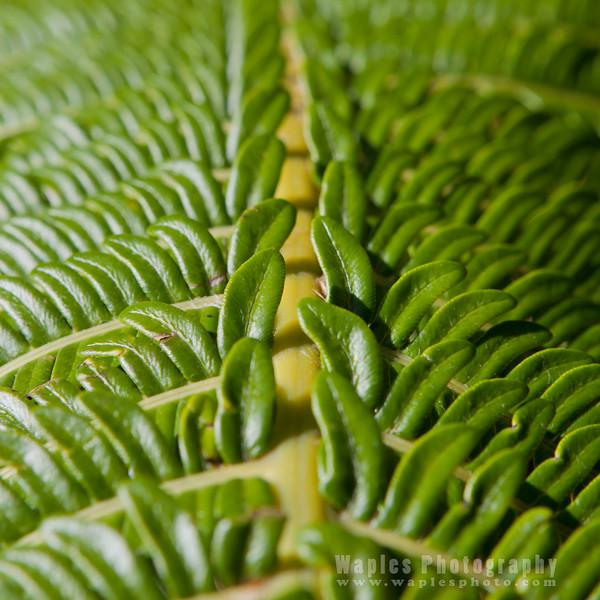Leaves with Bipinnate Symmetry