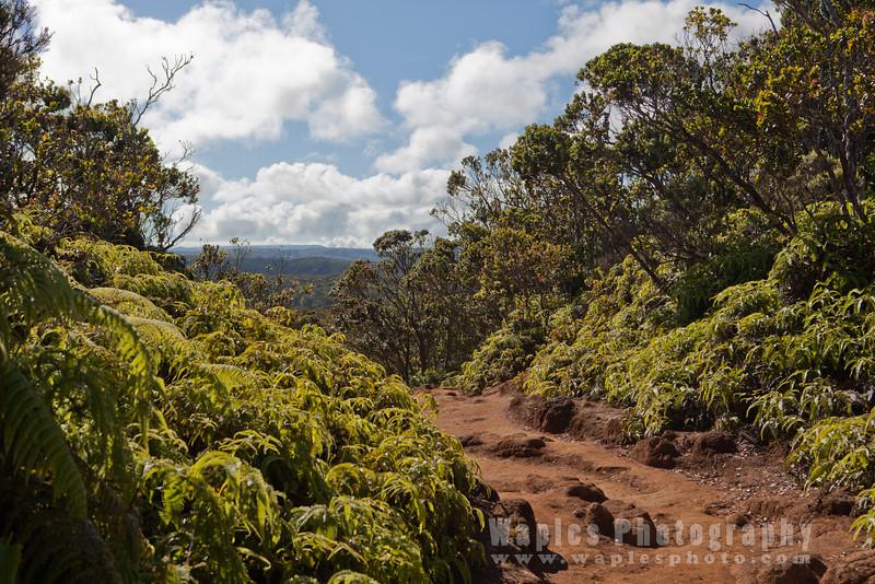 Along Pihea Trail
