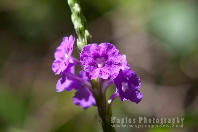 Shitake Flower