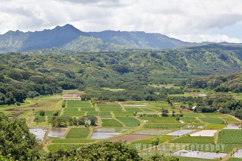 Taro Terraces