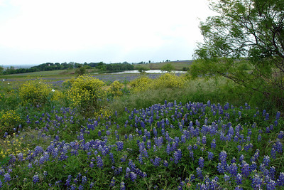 Wildflowers in Fredericksburg and Austin - April 21, 2007