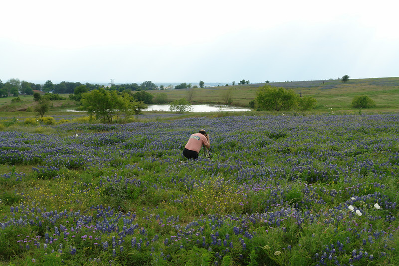 Eddie Lambert photographing bluebonnets at Celebration Church in Austin area.