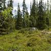 Gammelskog, Hirkjølen forskningsområde