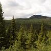 Fjellskog, Skarseterlia, Ringebu