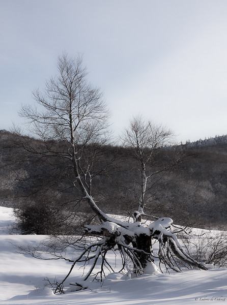 Plateau de Retord - Ain - France