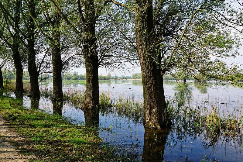 Laantje en moeras langs de Schouwendijk