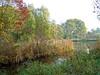 Lieskampen in herfstkleuren