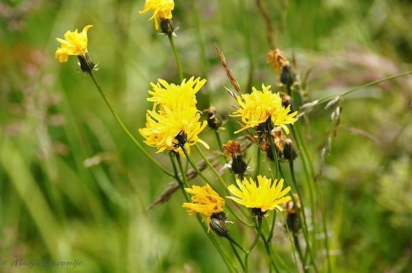 Gele bloemen.jpg