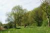 Lente <br /> Lieskampen, Bommelerwaard. Zo veel mooie kleuren groen in de lente