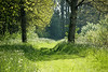 Lente <br /> I just love the spring, all these greens, it is the most beautiful time of the year