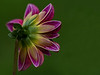 Kendralla Photography-ColorfulFlowerBack