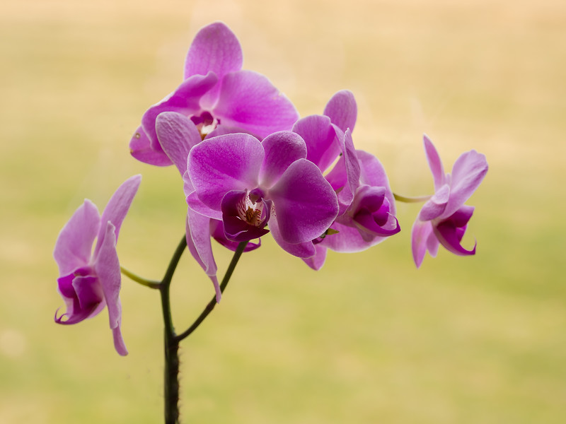 Kendralla Photography-blue orchid green background