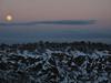 2010-01-29 Moonrise