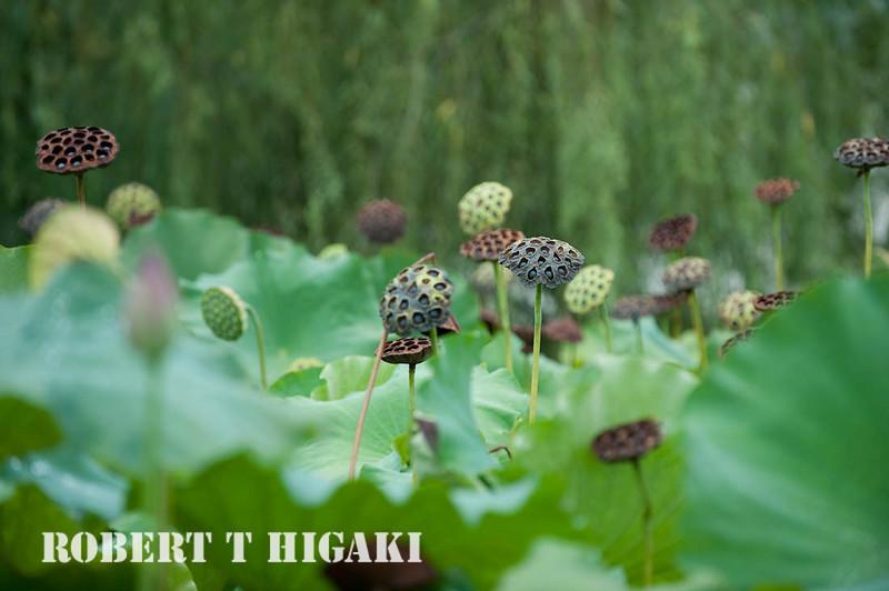 Hongcum village-6