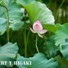 Hongcum village-4