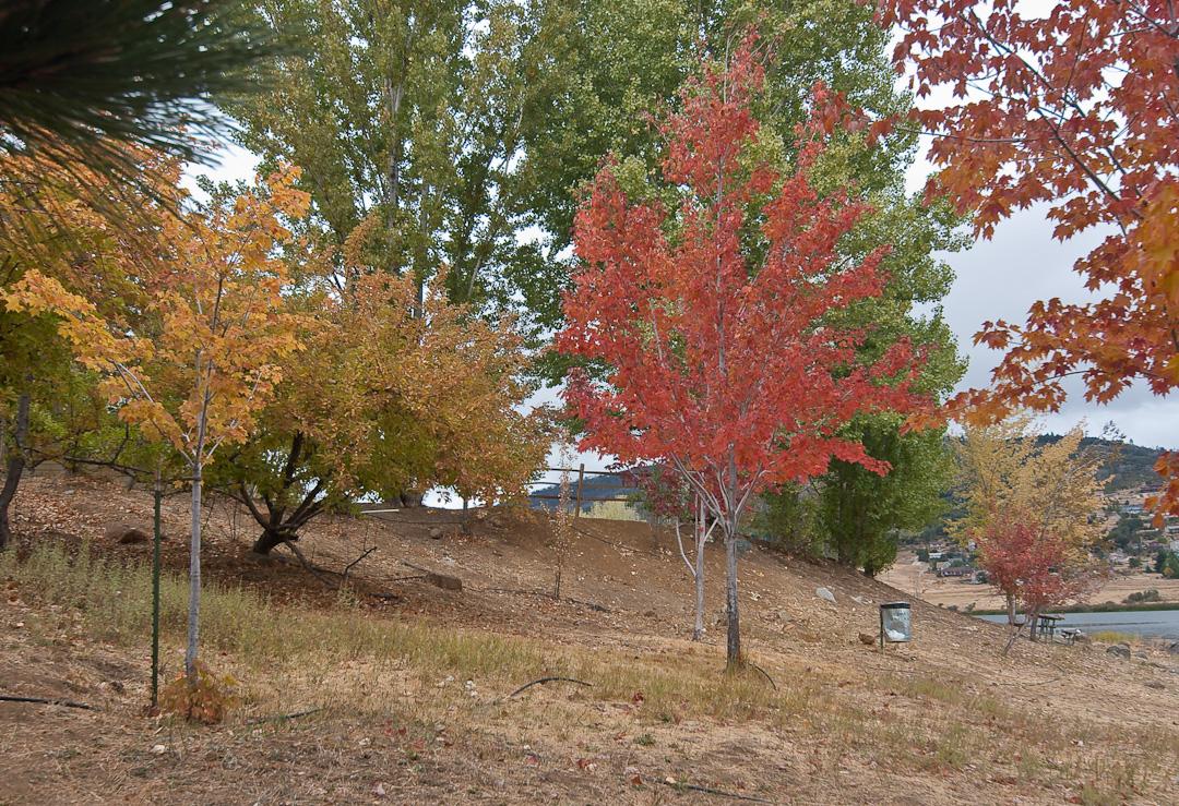 Autumn, un-retouched