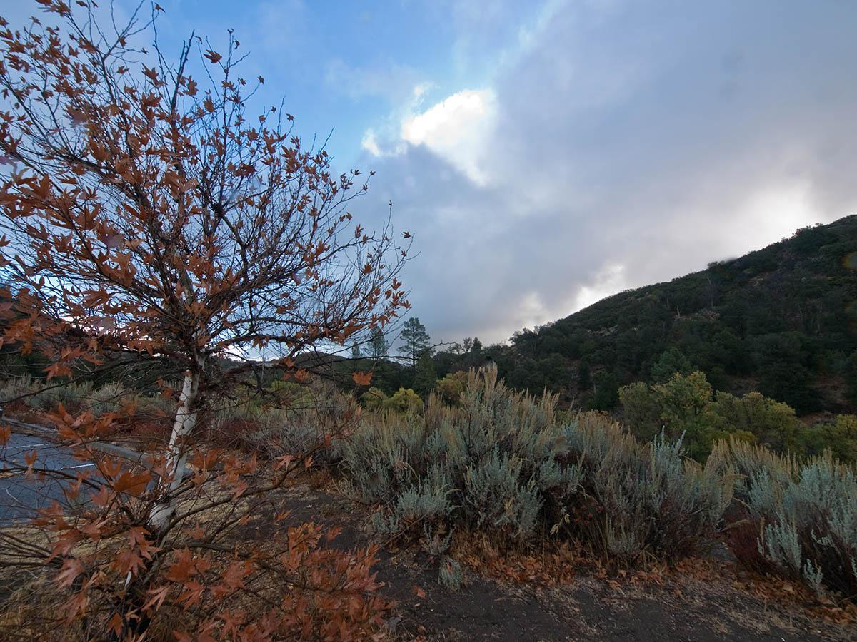 Birch in Secret Canyon
