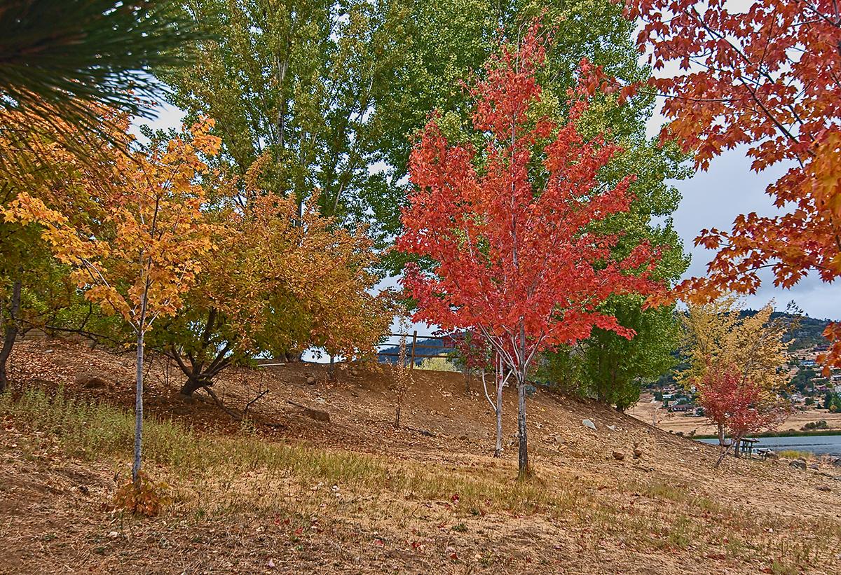Autumn at Lake Cuyamaca