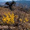 Aspens, Bristlecone Pine, Leviathon Peak