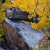 Rock, Log and Cottonwoods