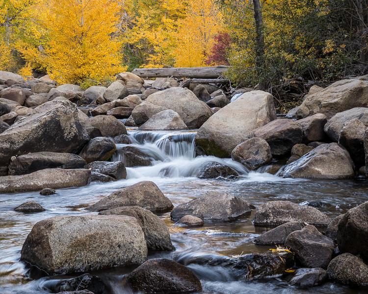 River & Foliage