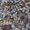 Frozen leaves. Not shown: my frozen toes.