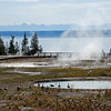 Candian Geese Enjoying the Hot Springs - Yellowstone National Park