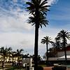 Palm tree - Hotel del