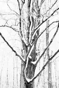 Fresh snowfall on a tree