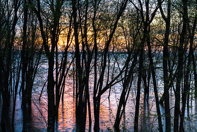 Flooded forest on the Lake of Two Mountains at sunrise