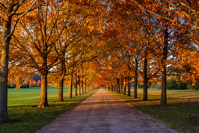 Late fall sunset on a tree lined lane