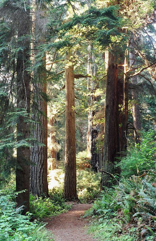 Trail in Prairie Creek State Park, CA