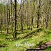 28  G Sunny Trail Shadows