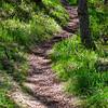 55  G Sunny Trail Shadows V