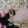 65  G Tiny Mushrooms Finger