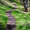 71  G Sunny Trail Shadows V