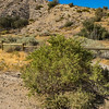 Desert Bush in Grassland Wilderness