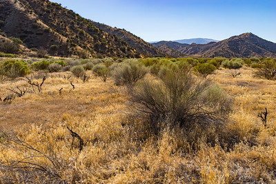 Grassland Field in Southern California