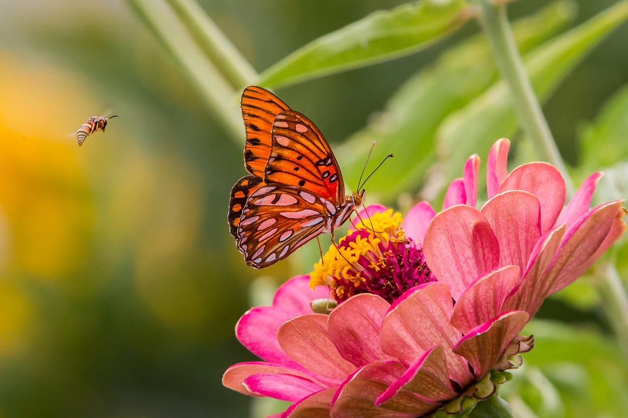 IMAGE: https://photos.smugmug.com/Landscapes/Huntington-Gardens/i-43dpqrD/3/X2/_MB_0332-X2.jpg