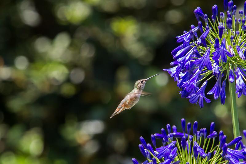 IMAGE: http://www.palermini.com/Flowers/Huntington-Gardens/i-Ln5NPmR/0/L/MB9716-L.jpg