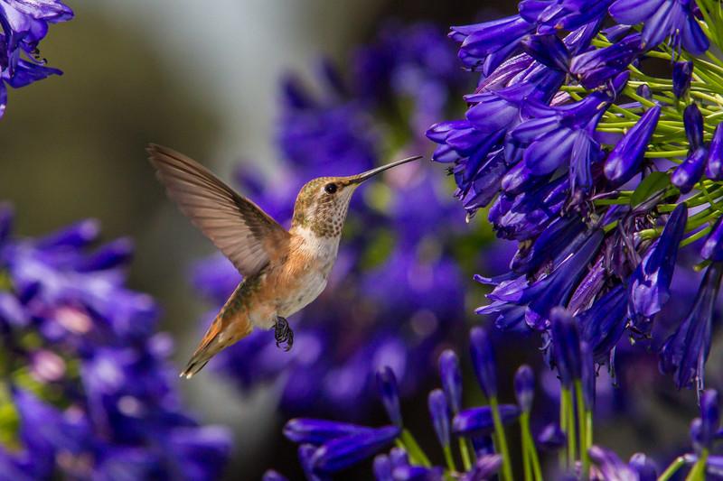IMAGE: http://www.palermini.com/Flowers/Huntington-Gardens/i-chtj3L2/0/L/MB9454-L.jpg