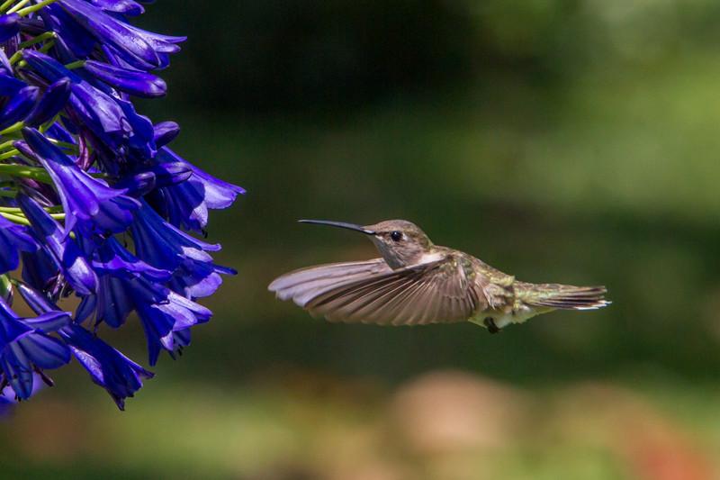 IMAGE: http://www.palermini.com/Flowers/Huntington-Gardens/i-sprJh8V/0/L/MB9338-L.jpg