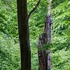 Dødt træ, levende træ