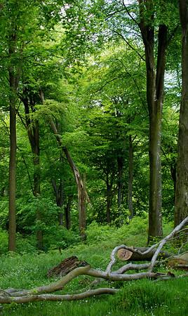Vild skov