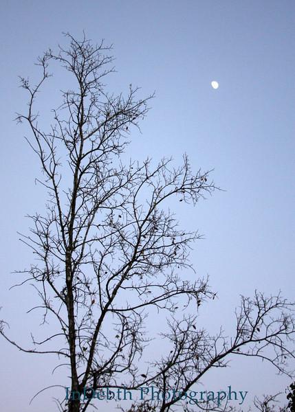 0605 Austin Tree 5ZX7