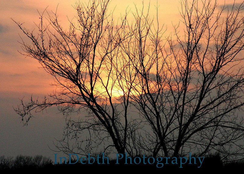 Topeka-tree-sunset-WJPG