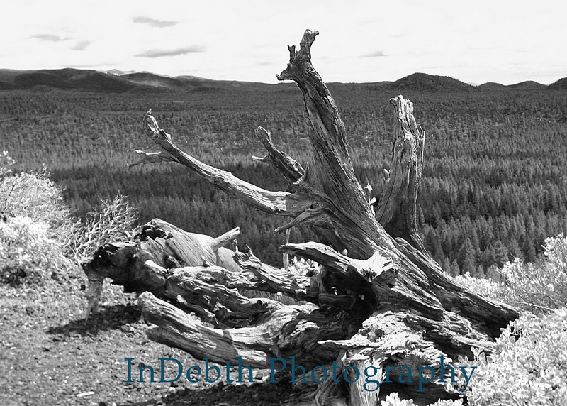 0496 Tree stump