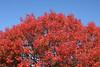 0712 Austin tree